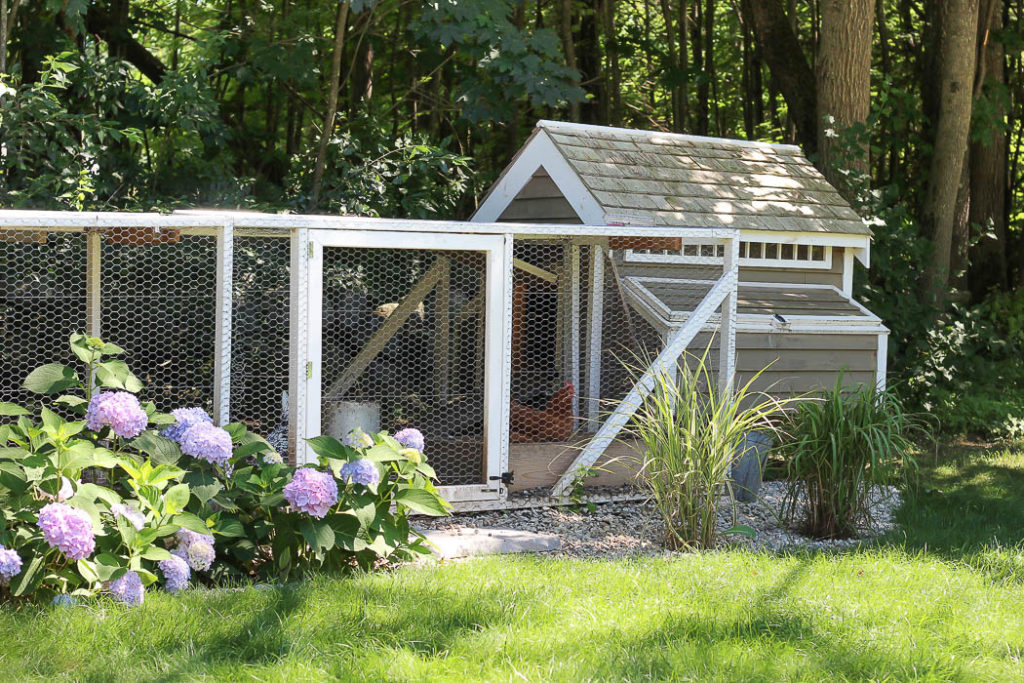 Our Chicken Coop | Rooms FOR Rent Blog